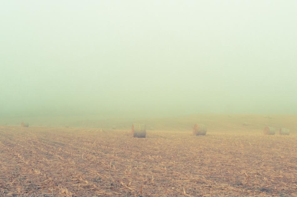 Hay Rolls under Fog