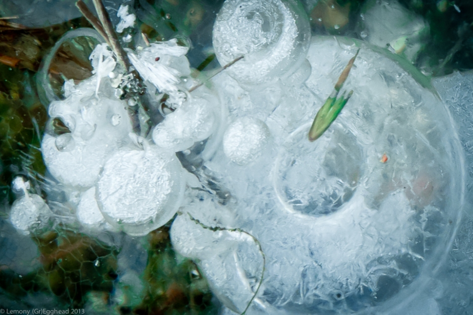 Webb Pond Bubbles