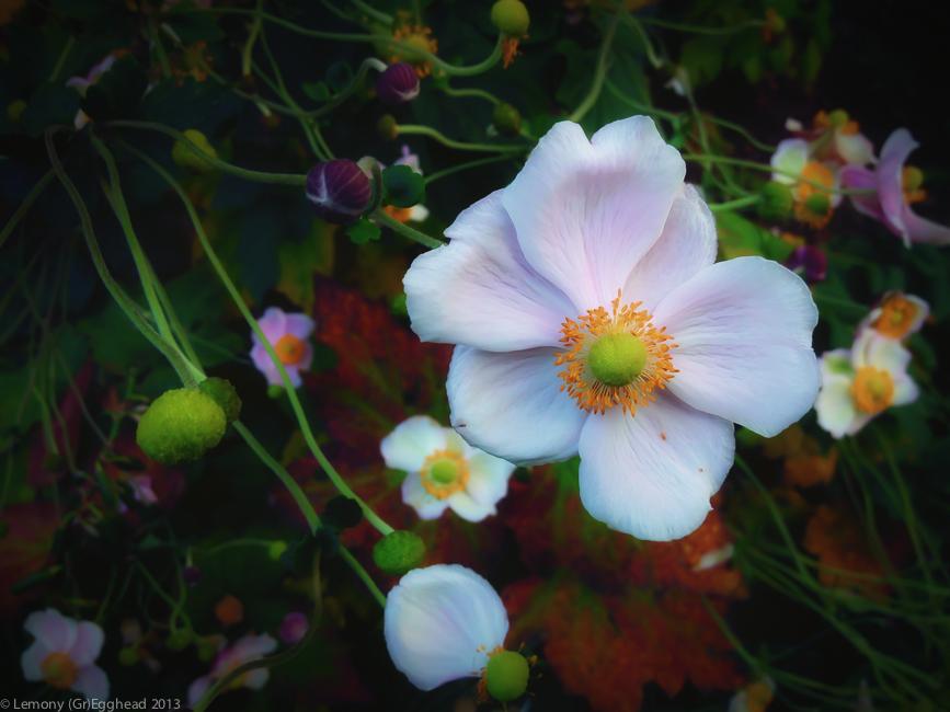 Oct_Flower
