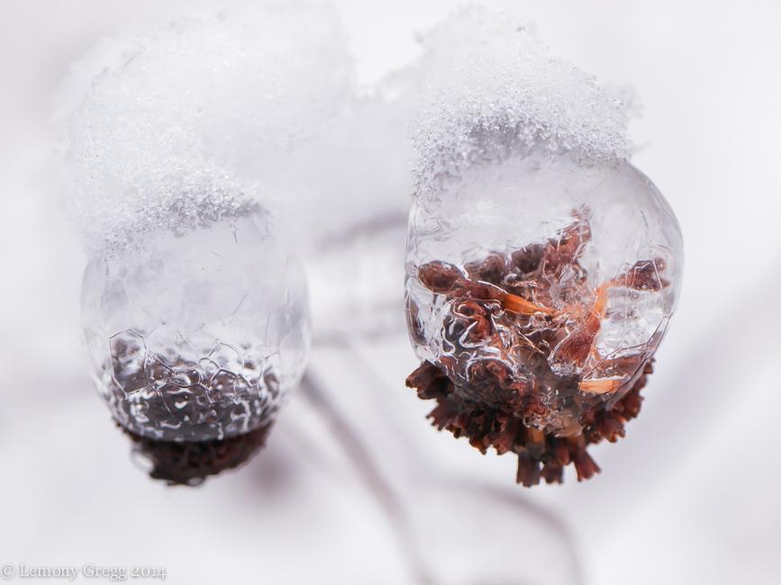 Frozen Bubble Weeds