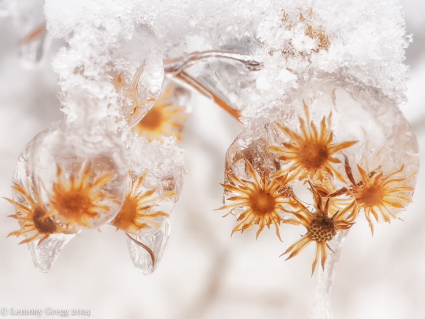 More Tiny Frozen Flowers