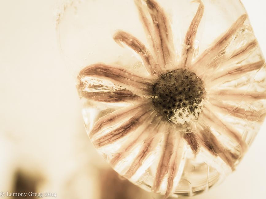 Tiny Frozen Flower