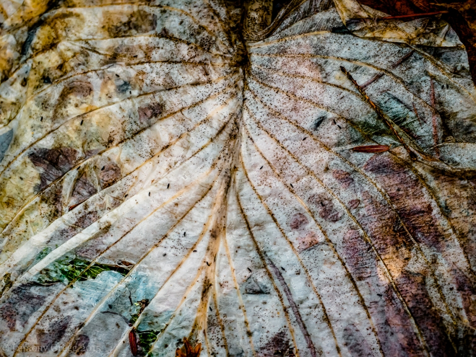 Bruised Leaf