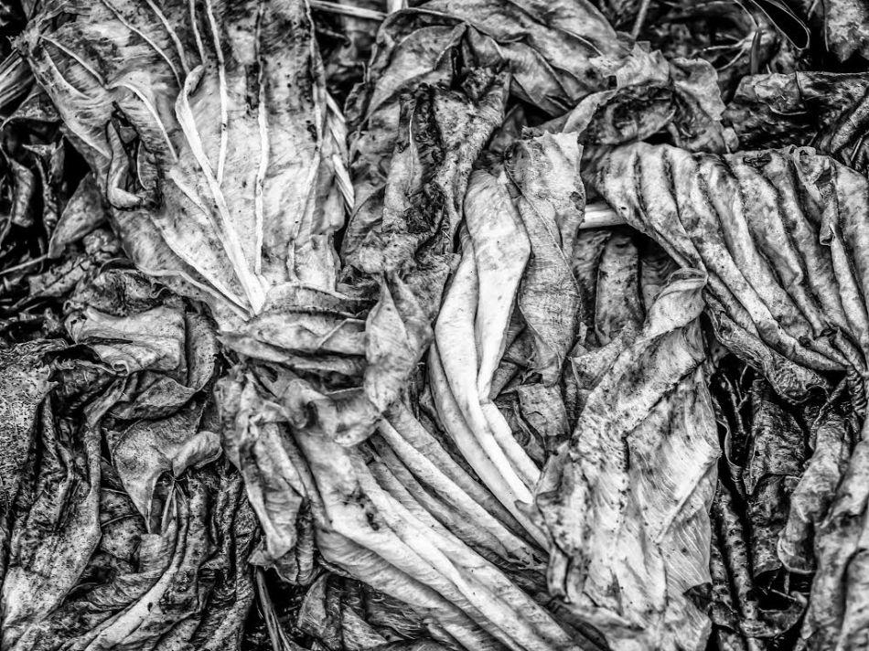 Leaf Sculpture photo