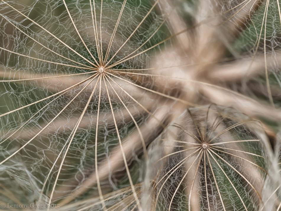Spider Wheels (Title by Little Pie)