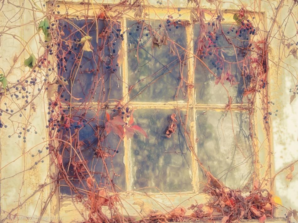 Stall Window 2