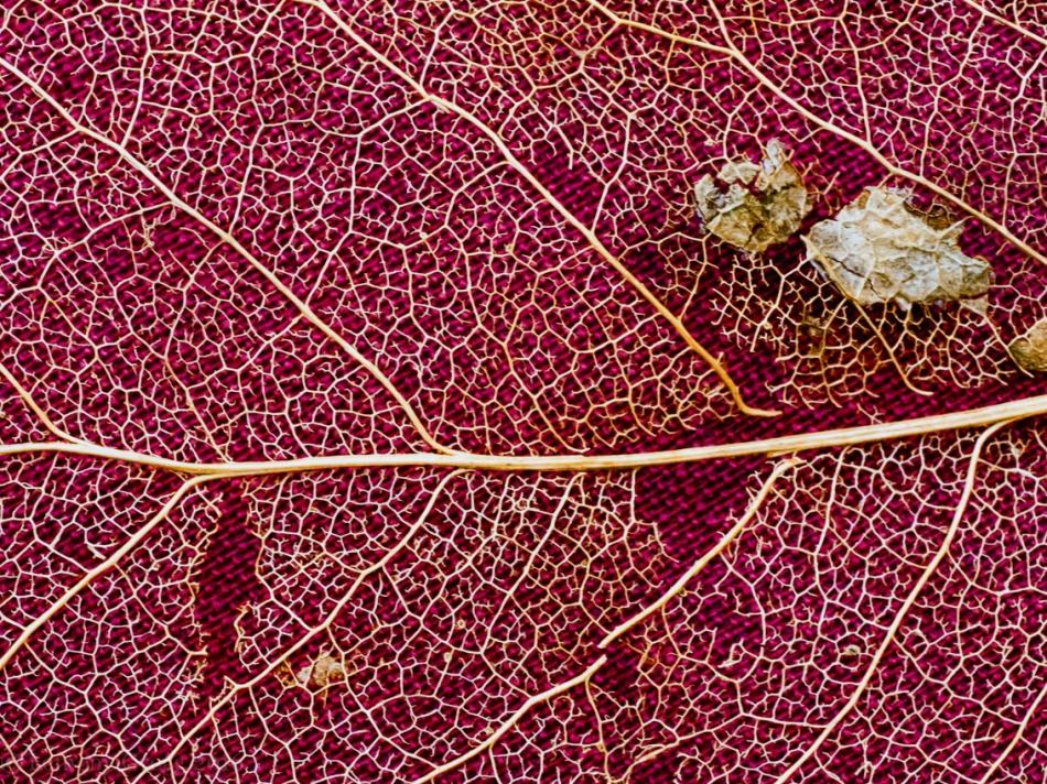 leafskeletoniv