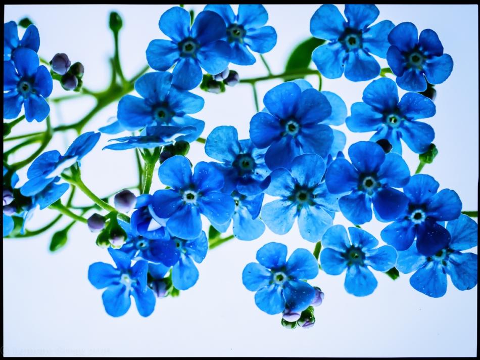 all the fragile blue