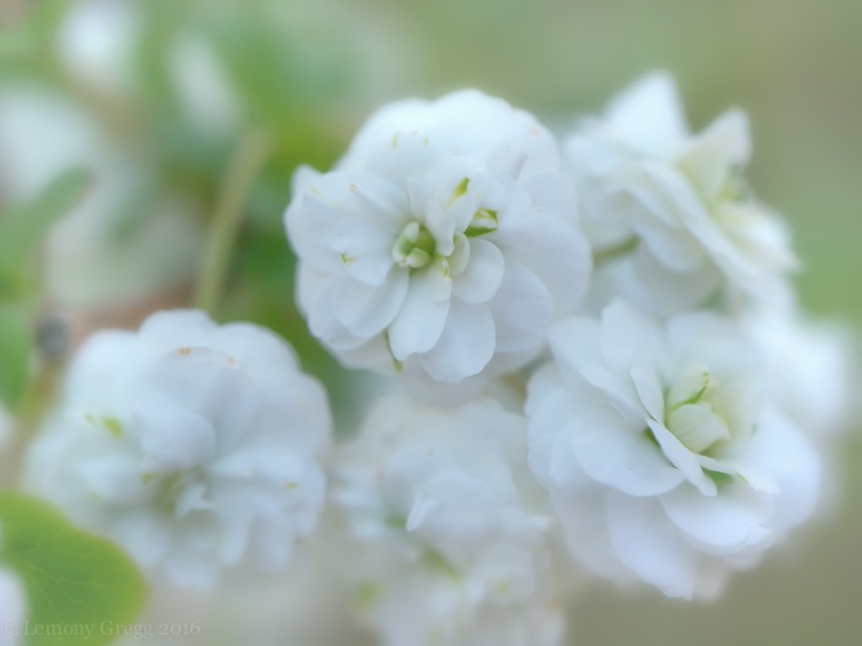 springsoftness
