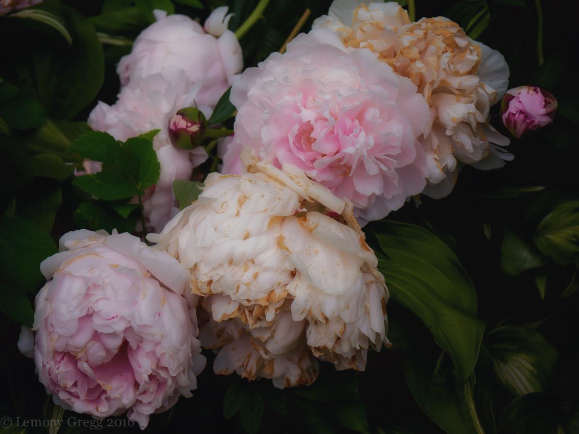 Flower Eater's Dream