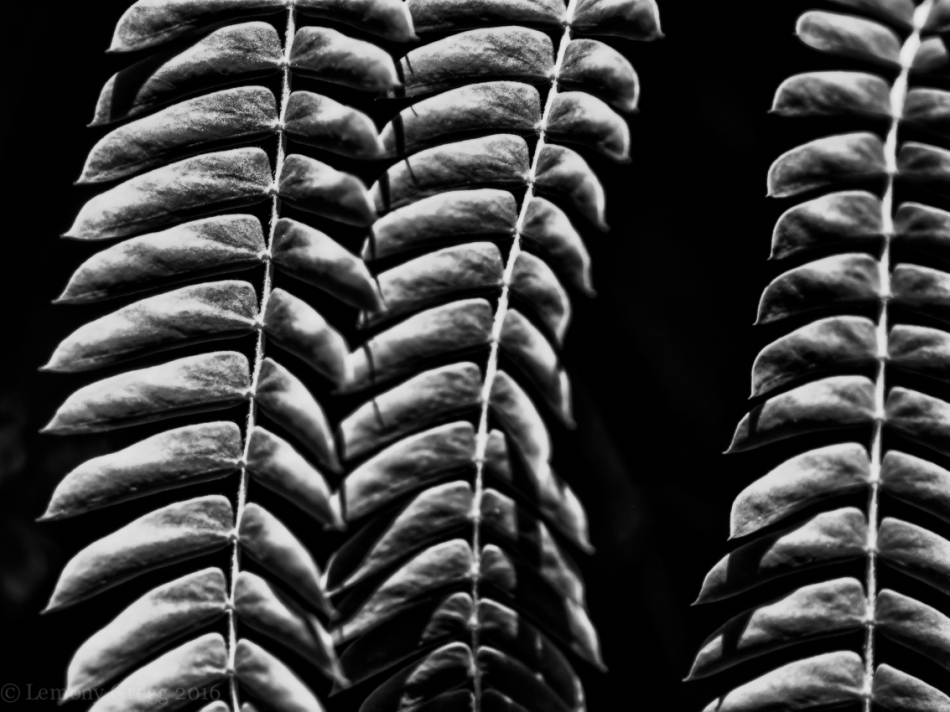 Sunlight on Fern Leaves