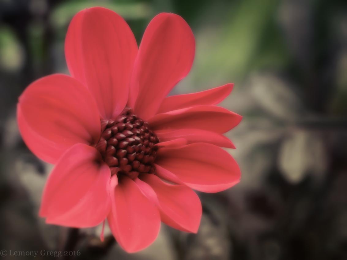 interpretation-of-red