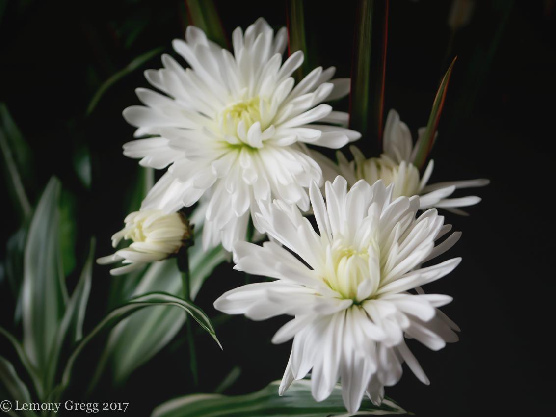 whitemums